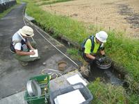 貝の採取と水路の調査
