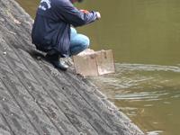 ウシモツゴの捕獲作業
